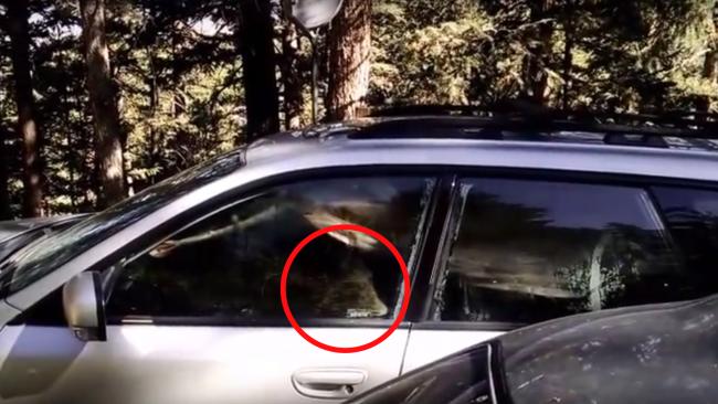 Orso intrappolato nell'auto: poliziotti aprono portellone6