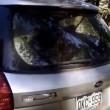 Orso intrappolato nell'auto: poliziotti aprono portellone2