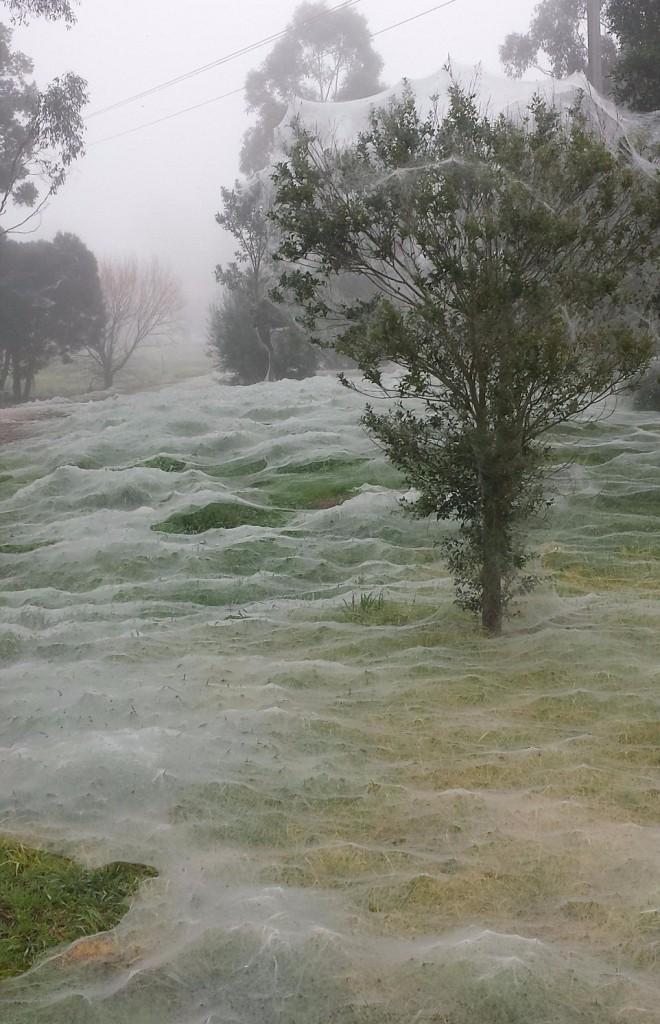 Ragnatele mongolfiera ragni si proteggono4