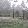 Ragnatele mongolfiera ragni si proteggono5