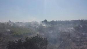 Guarda la versione ingrandita di Roma, a fuoco sterpaglie sotto Ponte Marconi FOTO
