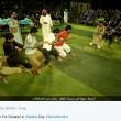 Isis lancia Olimpiadi stile Jihad: tiro alla fune e palloncini FOTO 3
