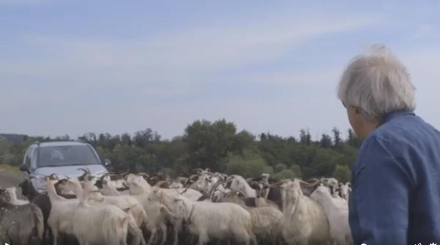 Sgarbi in viaggio per #missionemonnalisa bloccato dalle capre2