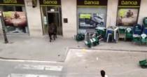 YOUTUBE Toro in fuga entra in una banca a Valencia