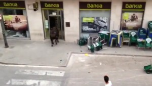 Guarda la versione ingrandita di YOUTUBE Toro in fuga entra in una banca a Valencia