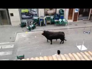 Toro in fuga entra in banca 5