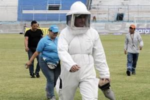 Vespe invadono campo e spalti: partita sospesa in Ecuador6