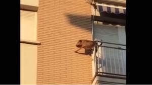 Cane chiuso in balcone senza acqua e cibo7