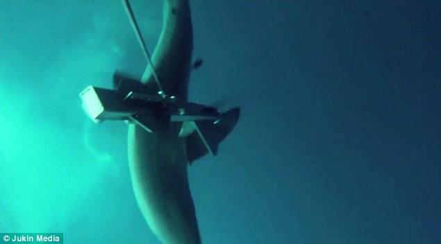 Squalo bianco morde drone marino 3