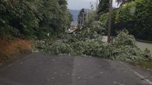 Maltempo Friuli, nubifragio: cade albero. Due persone bloccate in auto