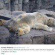 Arturo, l'orso più triste del mondo è morto01