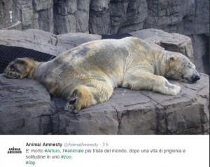 Guarda la versione ingrandita di Arturo, l'orso più triste del mondo è morto FOTO