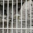 Arturo, l'orso più triste del mondo è morto02