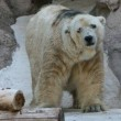 Arturo, l'orso più triste del mondo è morto03