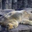 Arturo, l'orso più triste del mondo è morto05