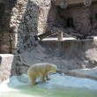 Arturo, l'orso più triste del mondo è morto06