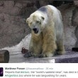 Arturo, l'orso più triste del mondo è morto07
