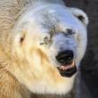 Arturo, l'orso più triste del mondo è morto10
