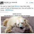 Arturo, l'orso più triste del mondo è morto11