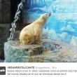 Arturo, l'orso più triste del mondo è morto12