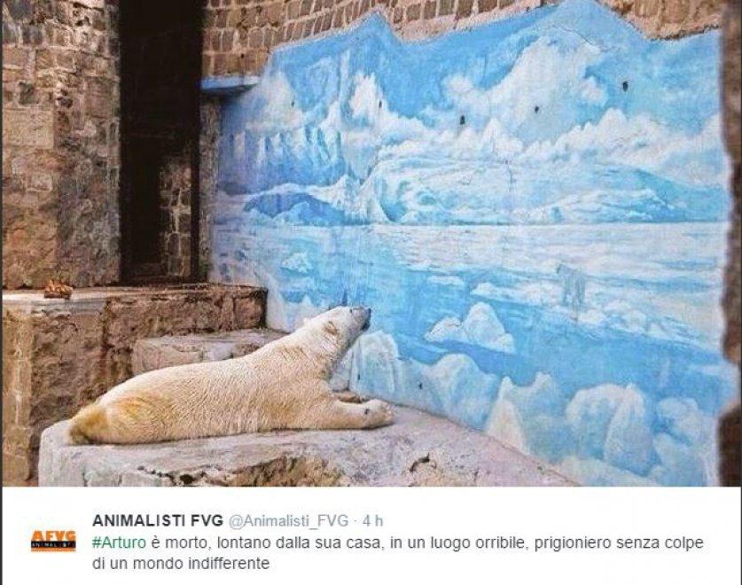 Arturo, l'orso più triste del mondo è morto13
