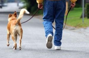 Torri del Benaco, divieto di pipì e cacca per i cani: padroni dovranno raccoglierle...