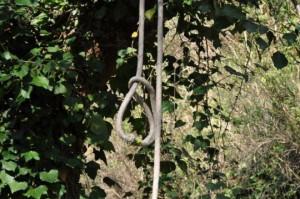 Caselle (Venezia): donna trovata morta impiccata nel parco