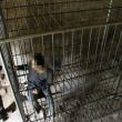 Cina, figlio schizofrenico: genitori lo chiudono in una gabbia FOTO 4