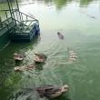 Coccodrilli circondano turisti su zattera3