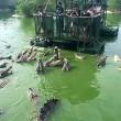 Coccodrilli circondano turisti su zattera4