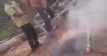Bruciano vivi tre cuccioli, otto minorenni arrestati in India VIDEO