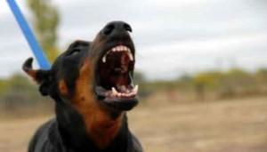Alessandria. Marocchino difende anziana da cane, padrone lo accoltella