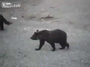 Orso si avvicina, uomo resta immobile. L'animale scappa via