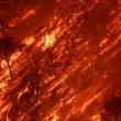 Incendio in California: fiamme e vento, una vittima FOTO2