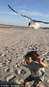 Bambino dà da mangiare ai gabbiani, ma loro lo attaccano77
