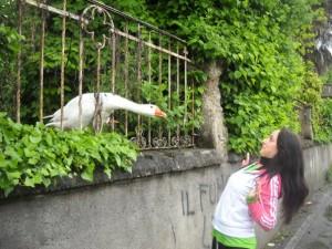 Oche antifurto in giardino: a Luneo si difendono così dai ladri