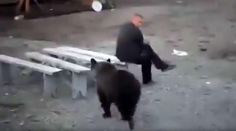 Orso si avvicina, uomo resta immobile