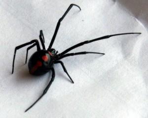 Misteriosi ragni in stiva nave,interrotte operazioni scarico