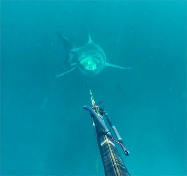 Australia, incontro ravvicinato con squalo 4 metri: la FOTO perfetta