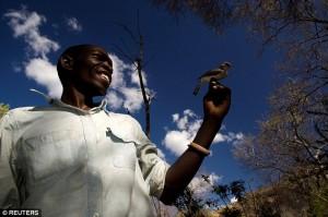"""Uomini e uccelli """"parlano"""": in Africa a caccia di miele con gli Honeyguide"""