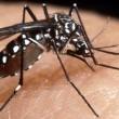 Zanzara tigre invade Italia: allarme in 63 province infestate