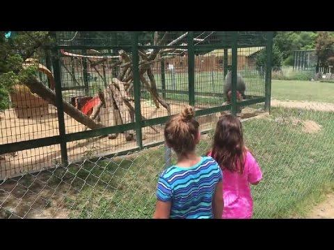 YOUTUBE Bambine la infastidiscono, la scimmia si vendica3