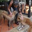 Cane senza zampe riceve le protesi: ecco la sua reazione5
