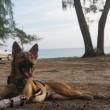 Cane senza zampe riceve le protesi: ecco la sua reazione