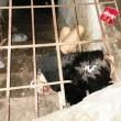Cina, donna malata di mente vive in gabbia nello scantinato FOTO