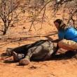Elefantino ha zampa ferita: la mamma non lo lascia mai4