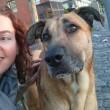 Il cane randagio che aspetta 6 mesi la hostess fuori dall'hotel 5