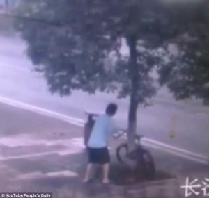 Ladro di biciclette sega l'albero per rubarne una6