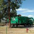 Orso a spasso nella foresta sul camion dei rifiuti 4