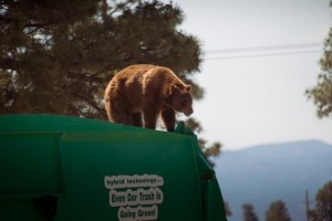 Orso a spasso nella foresta sul camion dei rifiuti 6